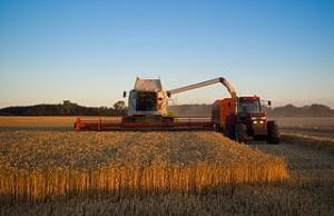 Industrielle Weizenernte. Foto von Larsz bei Flickr.